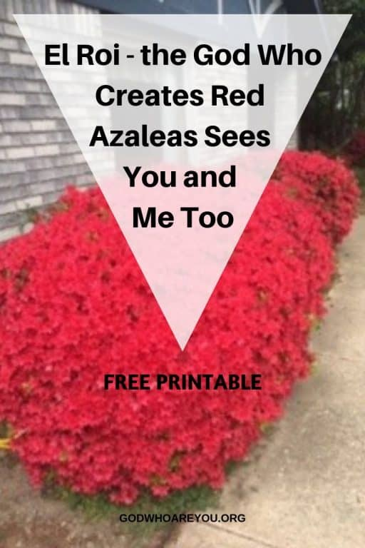El Roi the God who creates red azaleas sees you and me too